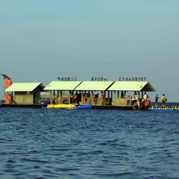 Berenang Bersama Hiu di Rumah Apung Bangsring