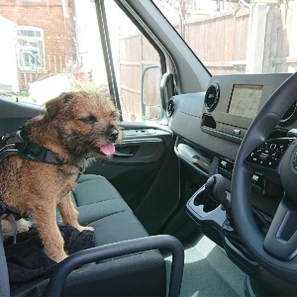 Anjing Akan Jadi Teman Setia Pengemudi di Inggris
