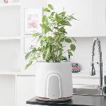 Pot Ini Bisa Bersihkan Udara di dalam Rumah